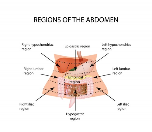 Regions-of-the-Abdomen