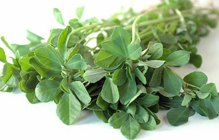 Properties of Fenugreek