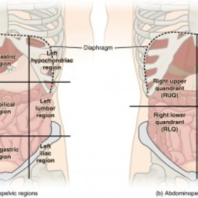 9-Regions-of-the-Abdomen-